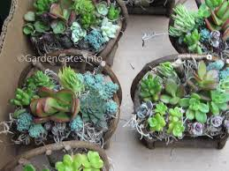 Small Picture Inspirations Find Your Best Style Of Succulent Landscaping For