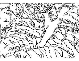Animal Camouflage Coloring Page Funny Pinterest Camouflage Coloring