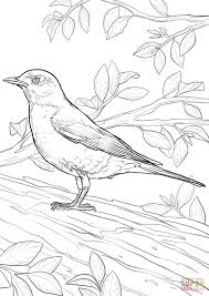 Small Picture American Robin coloring page Free Printable Coloring Pages