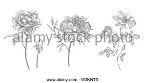 Bouquet Spring Flowers And Twigs Peonies Hydrangea Rose Vintage
