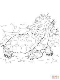 Small Picture Tortoise coloring pages Free Coloring Pages
