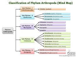 Biology Phylum Chart Arthropoda Classification Subphylum Classes Easybiologyclass