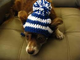 Crochet Dog Hat Pattern Extraordinary Crochet Hat Pattern For A Dog Dancox For