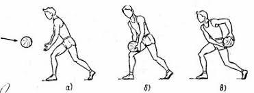 Реферат Баскетбол Рис 2 Ловля низко летящего мяча Амортизирующее движение с мячом выполняется по траектории к колену к животу к груди Ловля мяча летящего справа или