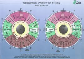 How To Read Iridology Chart The Definitive Guide Iriscope