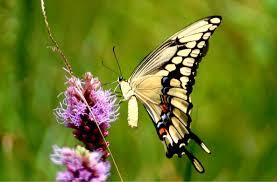 Tatuaggi Farfalle Tatuaggi Farfalle Con Fiori Tatuaggi Farfalle Sul