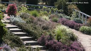 Small Picture Drought Tolerant Plants for a Xeric Garden This drought tolerant