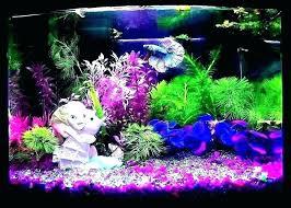 betta fish tank decorations ation betta fish tank decorations betta fish tank