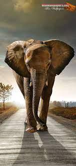 Iphone Cute Elephant Wallpaper Hd