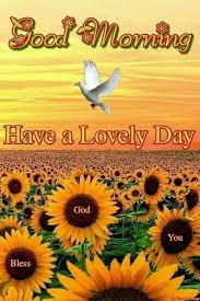 Good Morning Summer Quotes Best of Good Morning Have A Lovely Day Summer Quote Sunday Humor