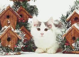 A White Kitten In Winter Illinois HD ...