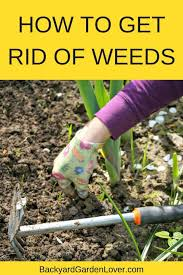 how to get rid of weeds in garden. Wonder How To Get Rid Of Weeds For Good? These Tips Will Help You Identify In Garden