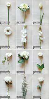 learn all about diffe types of flowers from roses and lilies to spring and wedding