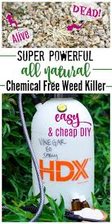 weed killer chemicals. Contemporary Chemicals Dead And Live Weeds With Homemade Vinegar Weed Sprayer Bottle In Weed Killer Chemicals