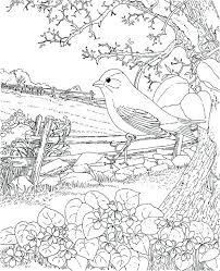 Outdoor Coloring Pages Goldfinch New Jersey State Bird Coloring Page