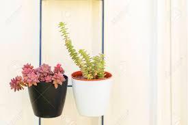 Succulent Pot Design Sedum And Crassula Perfolata Succulent Plant In Flower Pot Design