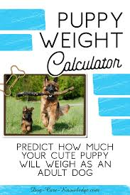 Puppy Weight Calculator How Big Will Your Dog Be