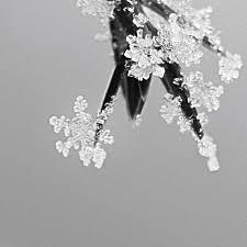 Weihnachtsstern Foto Bild Fotokunst Monochrome Fine Art