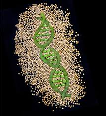 Image result for Soybean Genomics Researches