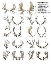 Chart For Deer Head In Silhouette Google Search Antler