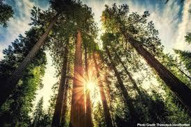 Image result for redwood forest