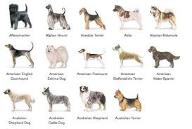 dog breeds alphabetical. Modren Breeds List Of Dog Breeds Alphabetical  Bing Images With A