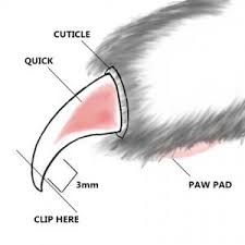 claw clipping diagram