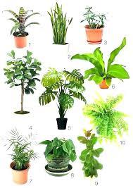 office plants low light best indoor plants best indoor plants low light indoor plants low light