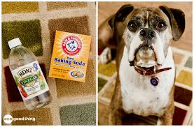 way to remove a pet stain from carpet pet stain remedy