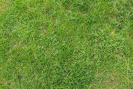 tall grass texture seamless. Grass Textures Archives | 14Textures Tall Texture Seamless E