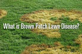 Brown Patch Disease What Is Brown Patch Lawn Disease Trugreen