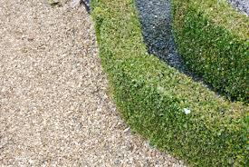 Primo piano sulla bella e verde giardino ornamentale con siepi di