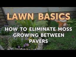 how to eliminate moss growing between