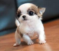 1000 cute puppies Ë Ëšá ËšË dogica 3d cutest world wonderful puppy photos gallery hd hq 4k mobile wallpapers image pics shout ideas
