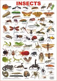 Educational Charts Series Insects
