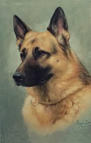 about pet portraits