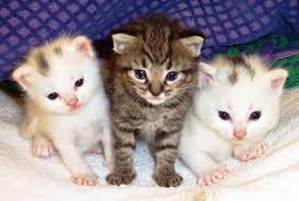 cute cats wallpapers free download. Interesting Wallpapers In Cute Cats Wallpapers Free Download L