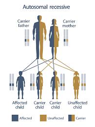 Hereditary Hemochromatosis By Michelle Woodfield Infographic