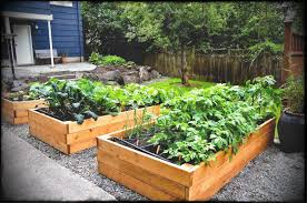 enchanting raised backyard vegetable garden mixed with wooden fence also indigo horizontal wall and sweet ceramic