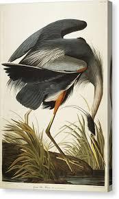 great blue heron on heron canvas wall art with heron canvas prints fine art america