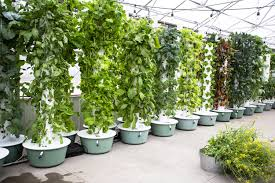 best hydroponic tower vertical hydroponic system on 2019 101 growlights