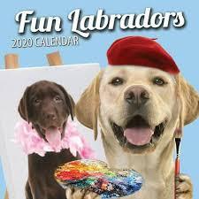 Fun Labradors 2020 Labrador Wall Calendar 2020 Ebay