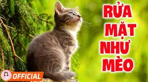 Vì Sao Con Mèo Rửa Mặt - Hai Con Thằn Lằn Con - Liên khúc nhạc thiếu nhi  vui nhộn - YouTube