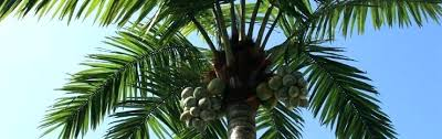 lighted palm tree michaels outdoor artificial palm tree trees for outside manufactured synthetic commercial palm trees