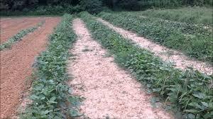 raised row vs furrow planting