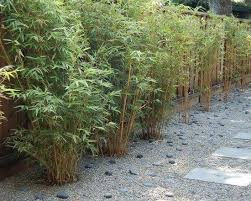 Small Picture 9 best bamboo images on Pinterest Bamboo hedge Bamboo garden