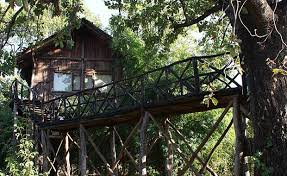 tree house jaipur. The-tree-house-resort-jaipur Tree House Jaipur