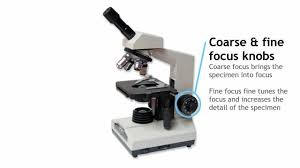 Using A Good Compound Light Microscope Introduction To Microscope Structures Functions Lessons