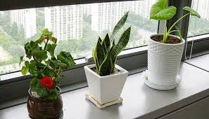 office cubicle plants. Plants In Office Cubicle U