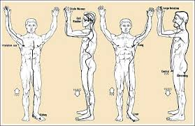 meridian therapy for wellness Meridian Lines Body Map meridian therapy chart meridian lines body map